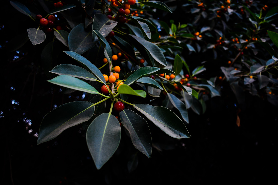 Orange, Green and Dark - fotokunst von Tal Paz-fridman