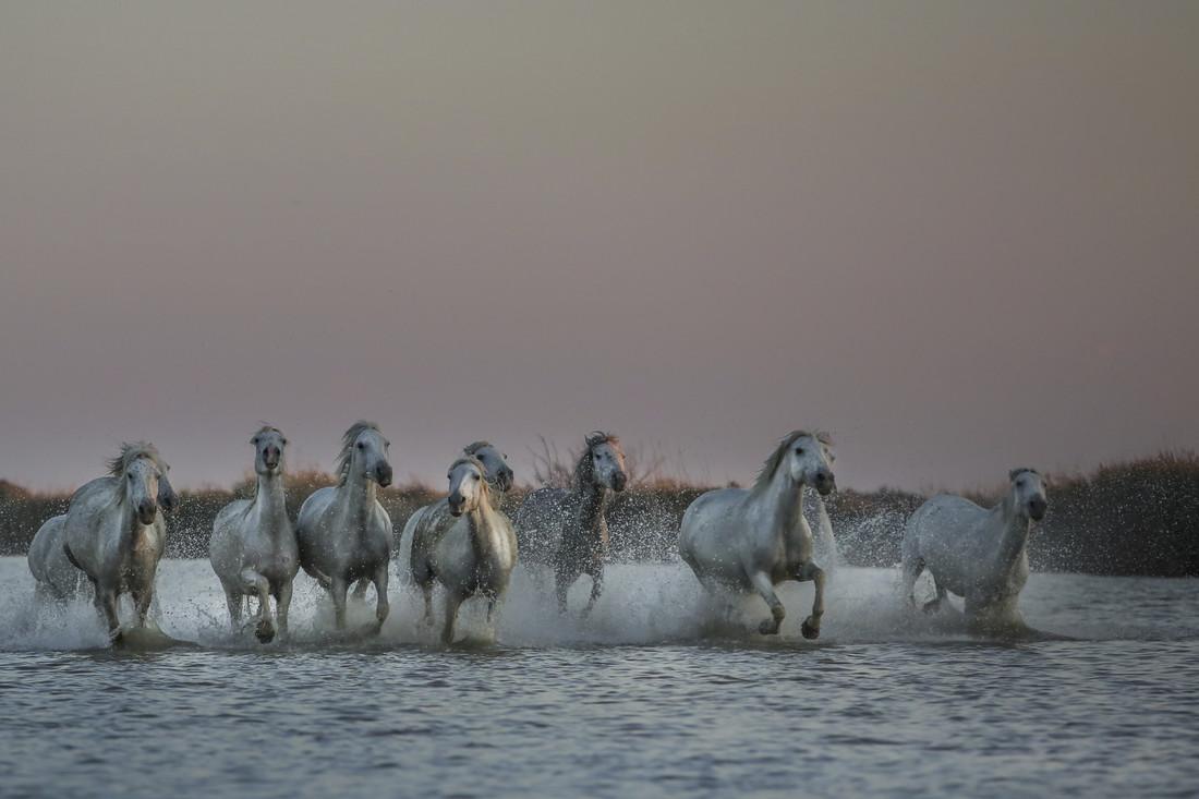 wild horses - Fineart photography by Nicolas De Vaulx