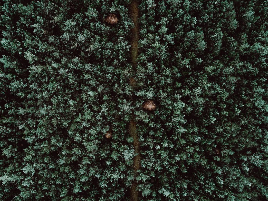 Hidden Path - Fineart photography by Steven Ritzer