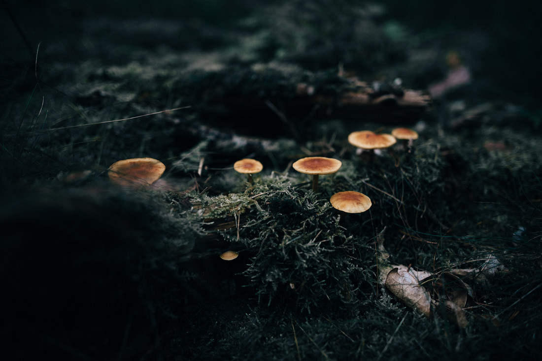 Mushrooms in a moody forest Prt. 3 - Fineart photography by Steven Ritzer