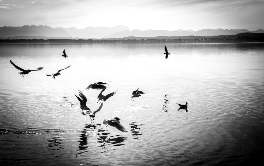 Birds - Fineart photography by Gabriele Brummer