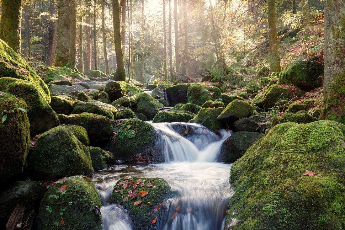 Black Forest River In Autumn - Fineart photography by Moritz Esser