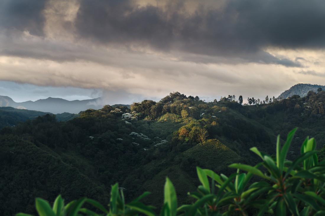 Tropical Upland - Fineart photography by Felix Finger