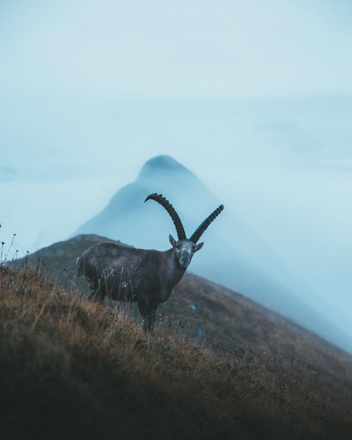 KING IN THE MOUNTAINS - fotokunst von Fabian Heigel