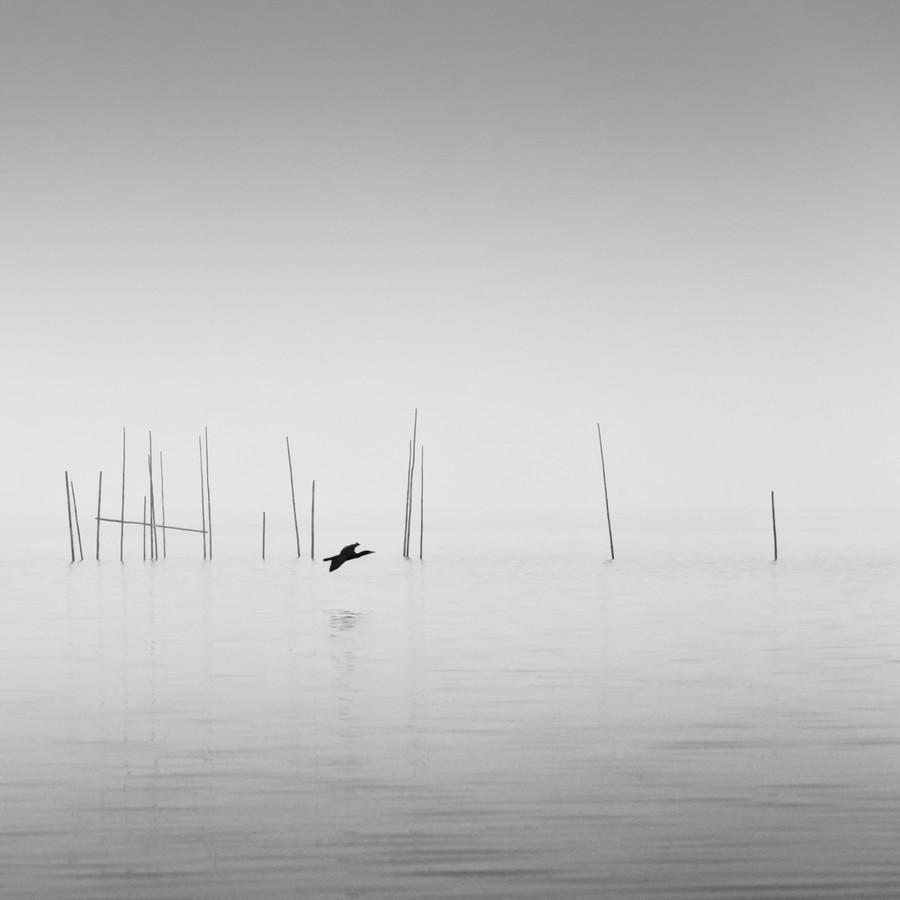 Cormorant - fotokunst von Holger Nimtz