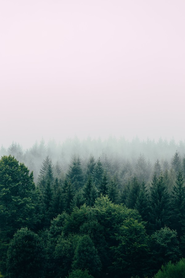Foggy Forest - Fineart photography by Christian Hartmann