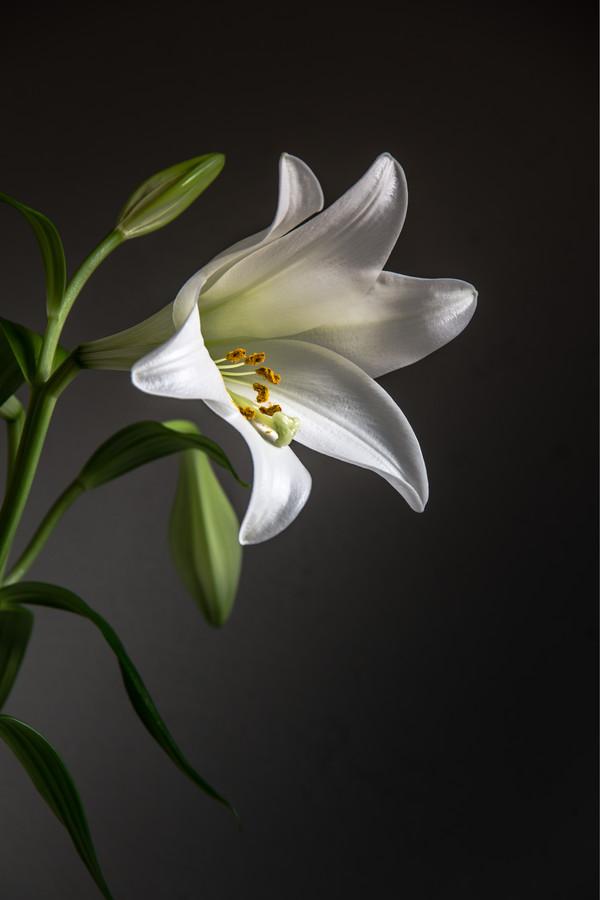 Lily - fotokunst von Björn Witt