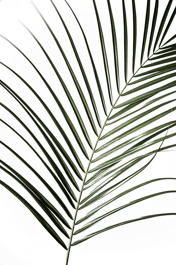 Palm Leaves 8 - Fineart photography by Mareike Böhmer