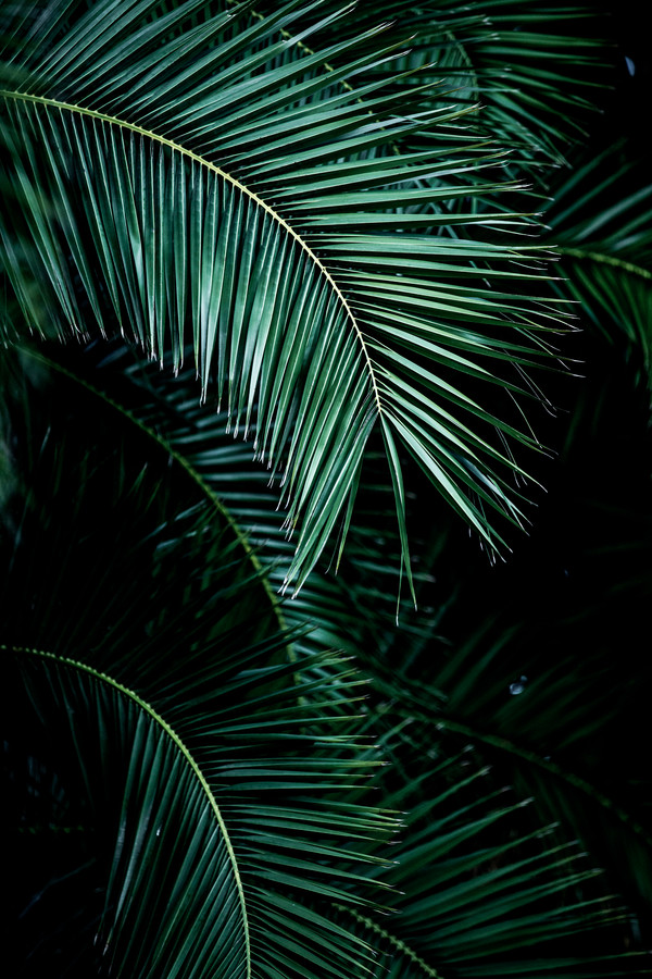 Palm Leaves 9 - Fineart photography by Mareike Böhmer