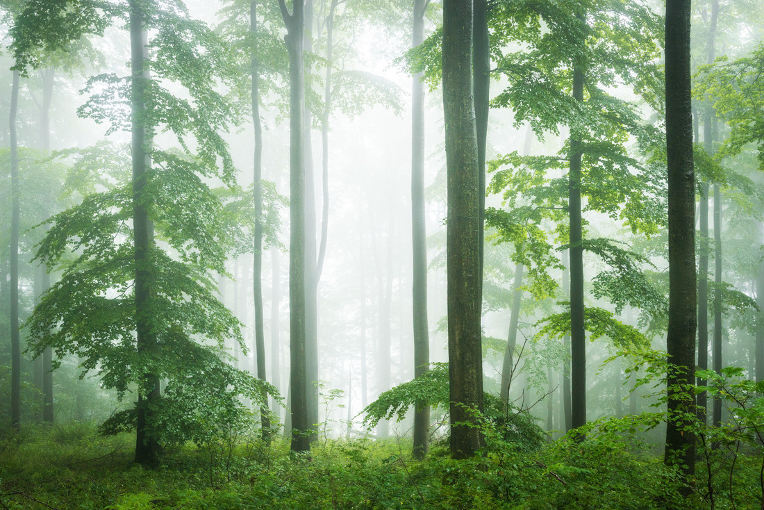 Forest VII - Fineart photography by Heiko Gerlicher