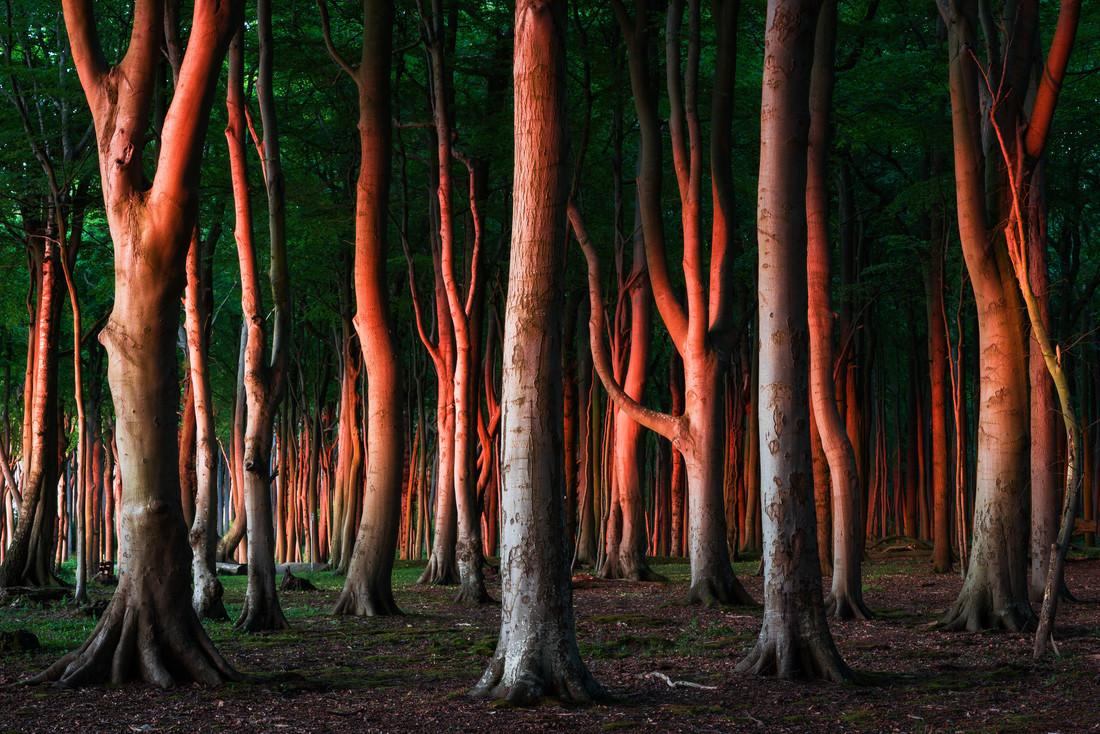 Wald VIII - fotokunst von Heiko Gerlicher