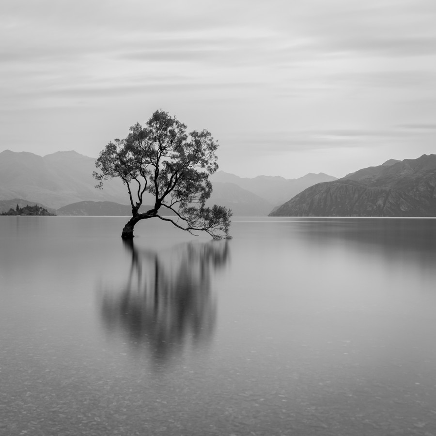 That Wanaka Tree - fotokunst von Christian Janik