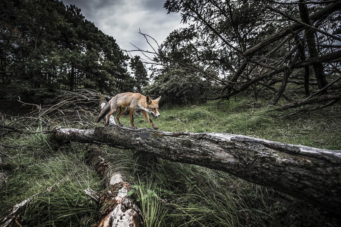 Leaving - fotokunst von Brian Decrop