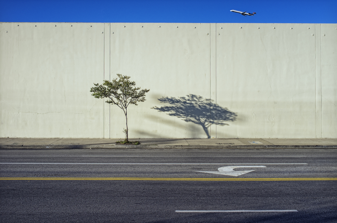 Tree, Shadow, and Plane - Fineart photography by Jeff Seltzer