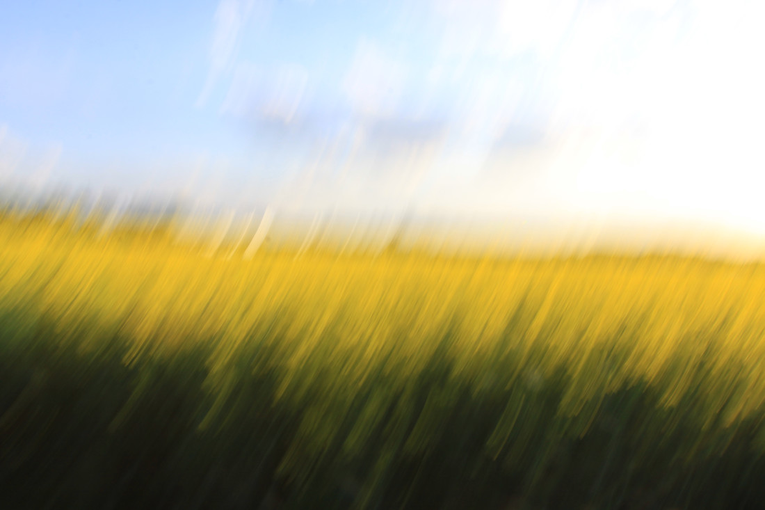 fields of gold 89 - fotokunst von Steffi Louis