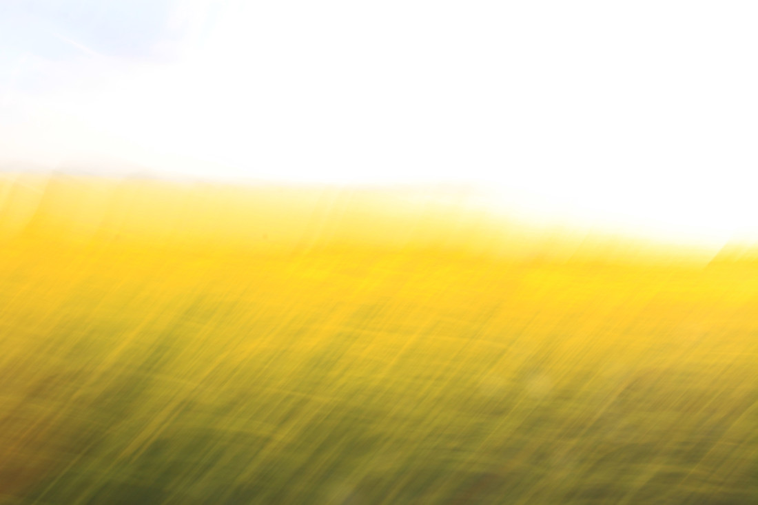 fields of gold 06 - fotokunst von Steffi Louis