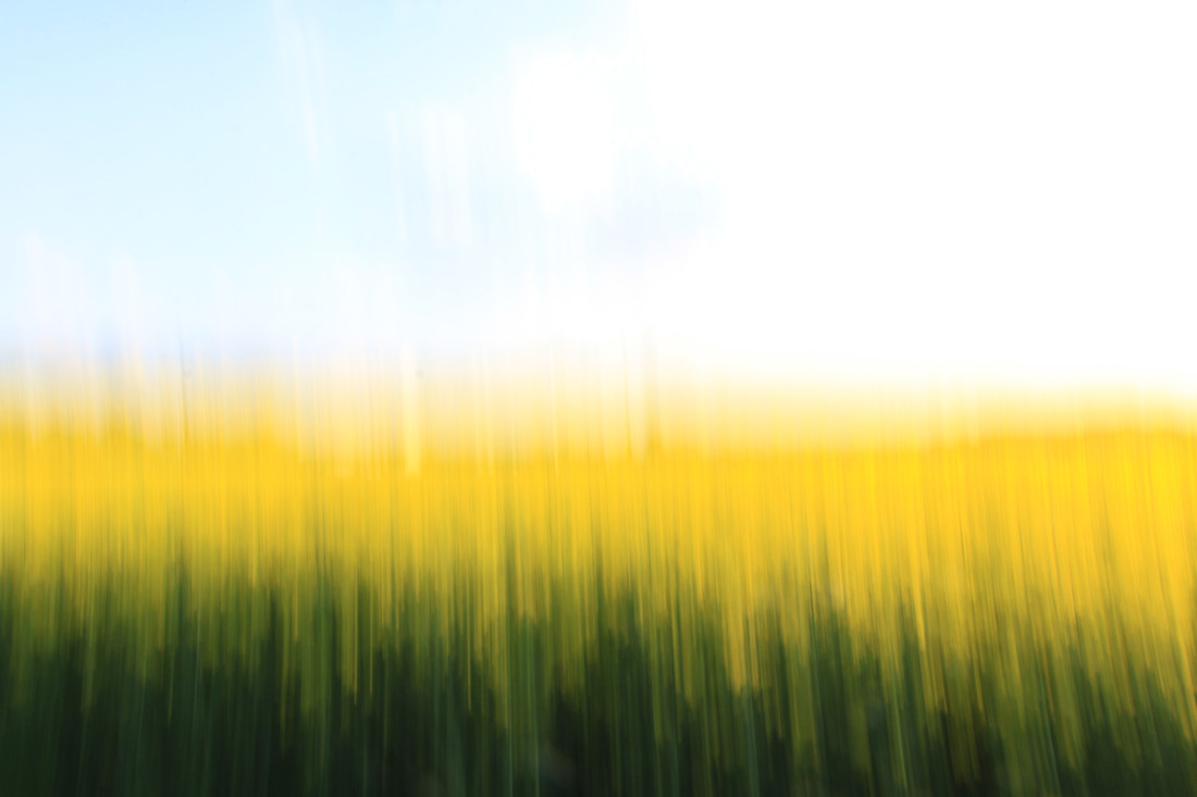 fields of gold 01 - fotokunst von Steffi Louis