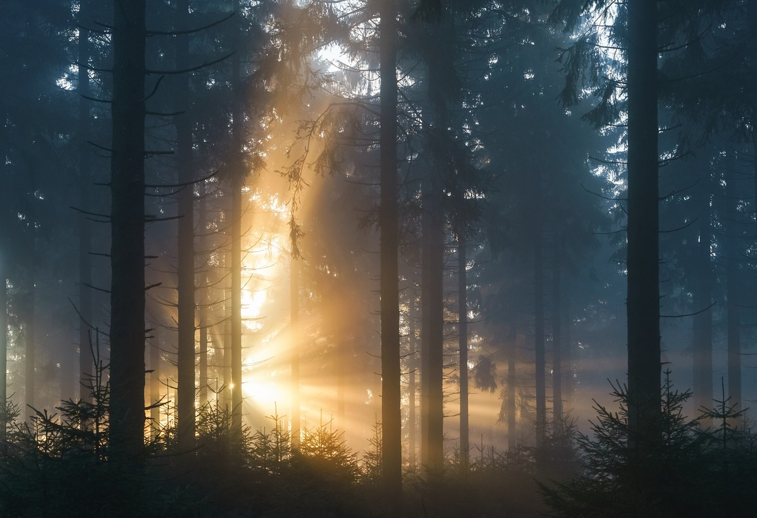 Lightburst in the Forest - Fineart photography by Alex Wesche