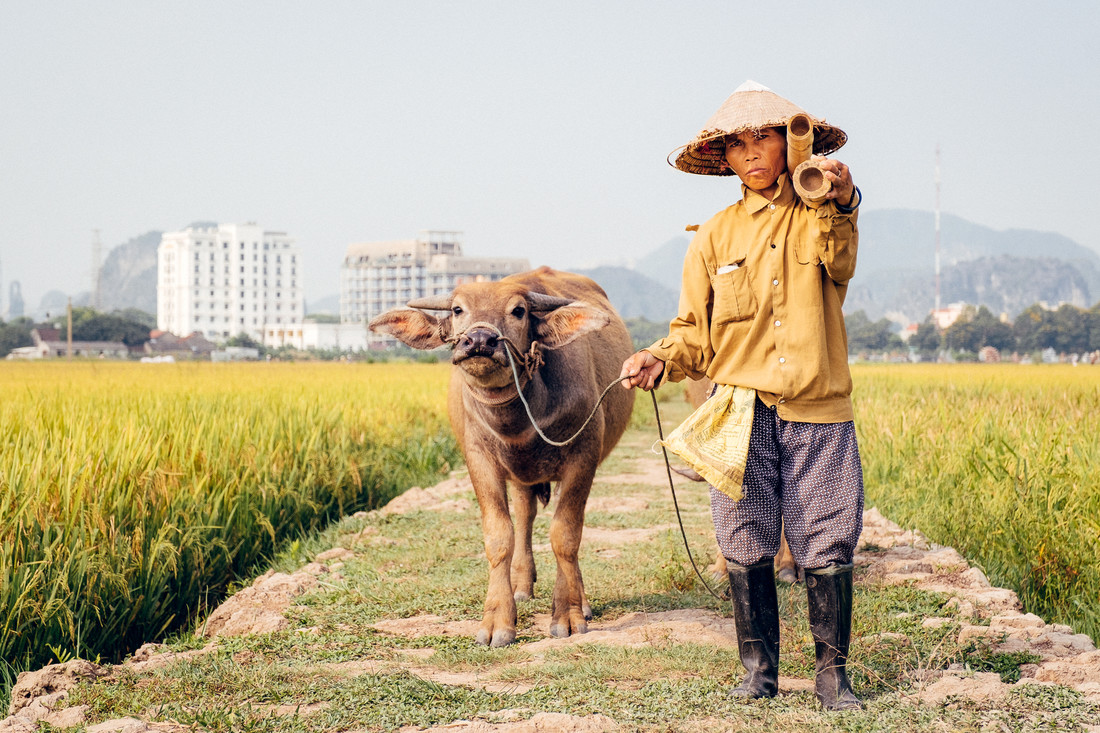 Rice farmer in Ninh Binh - Fineart photography by Manuel Gros