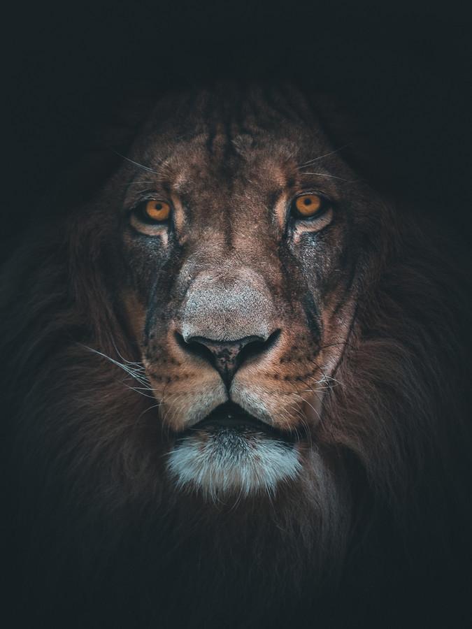 König der Löwen - fotokunst von Daniel Weissenhorn