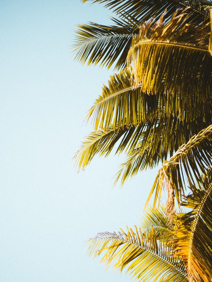 PALM TREE LEAVES - fotokunst von Fabian Heigel