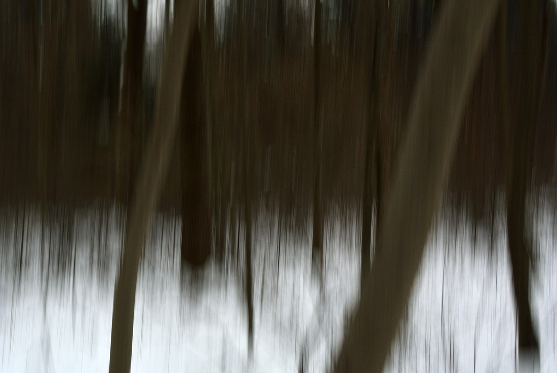 Trees - Fineart photography by Sascha Hoffmann-Wacker