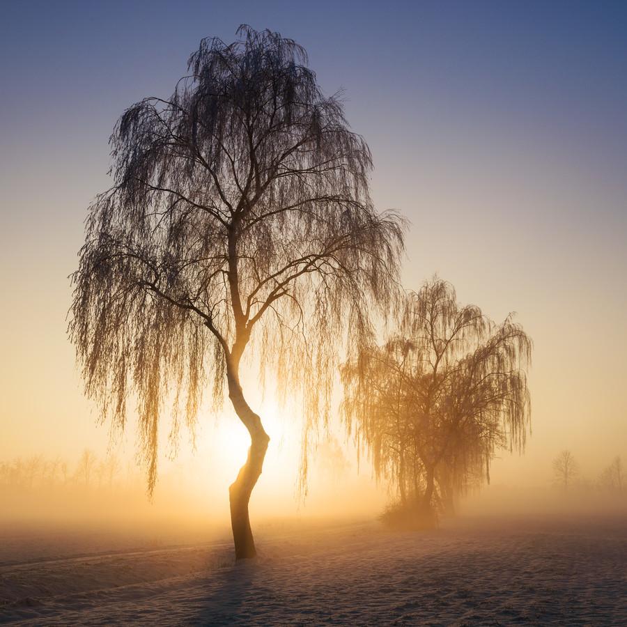 Winterbäume VII - fotokunst von Heiko Gerlicher
