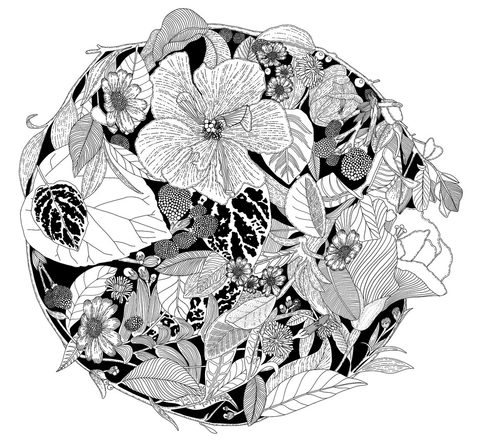 Botanical Circle (Black and White) - Fineart photography by Catalina Villegas