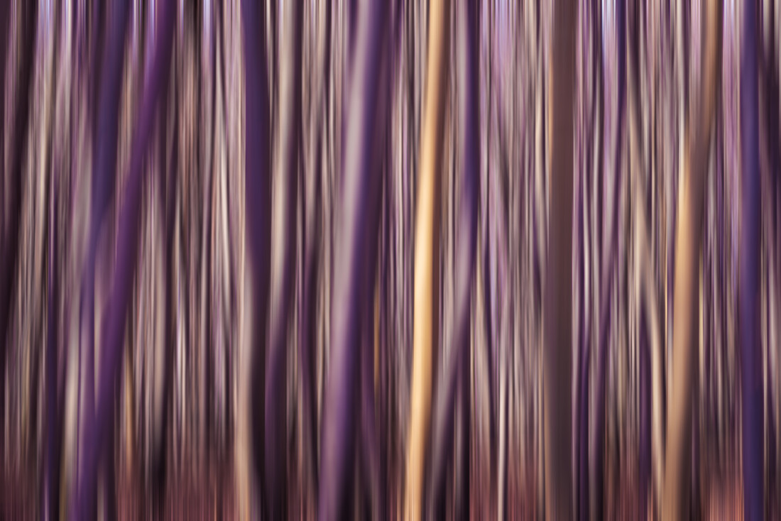 Forest Study - Fineart photography by Thomas Kleinert