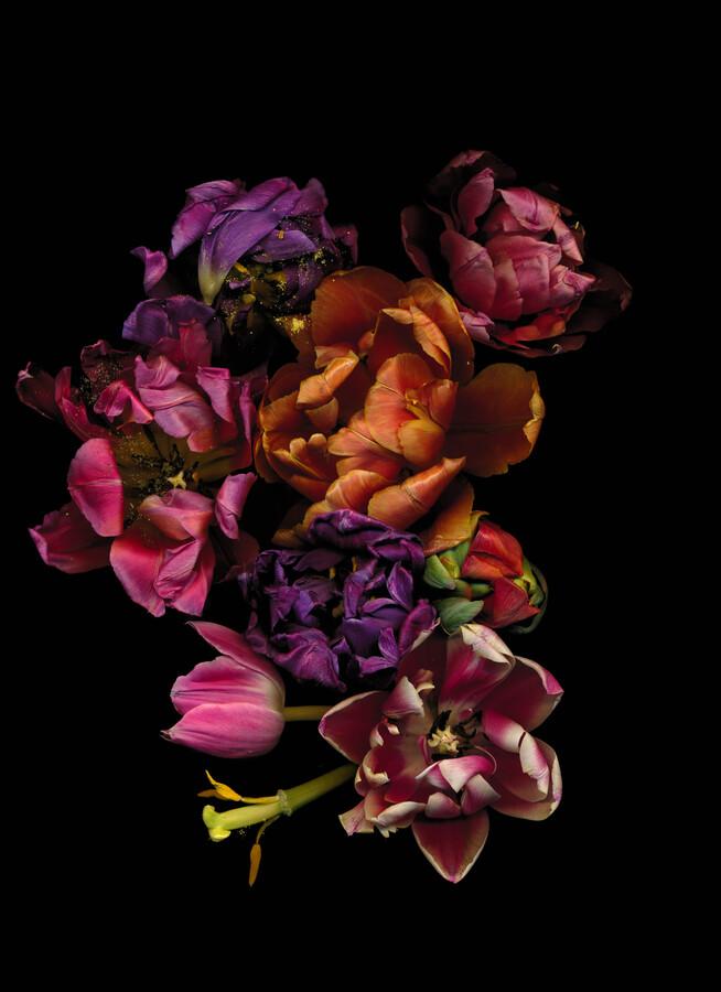 Milota - Fineart photography by Ramona Reimann
