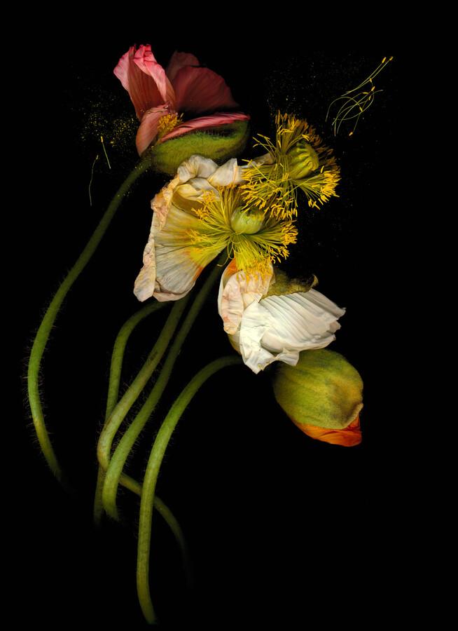 Asuka - Fineart photography by Ramona Reimann