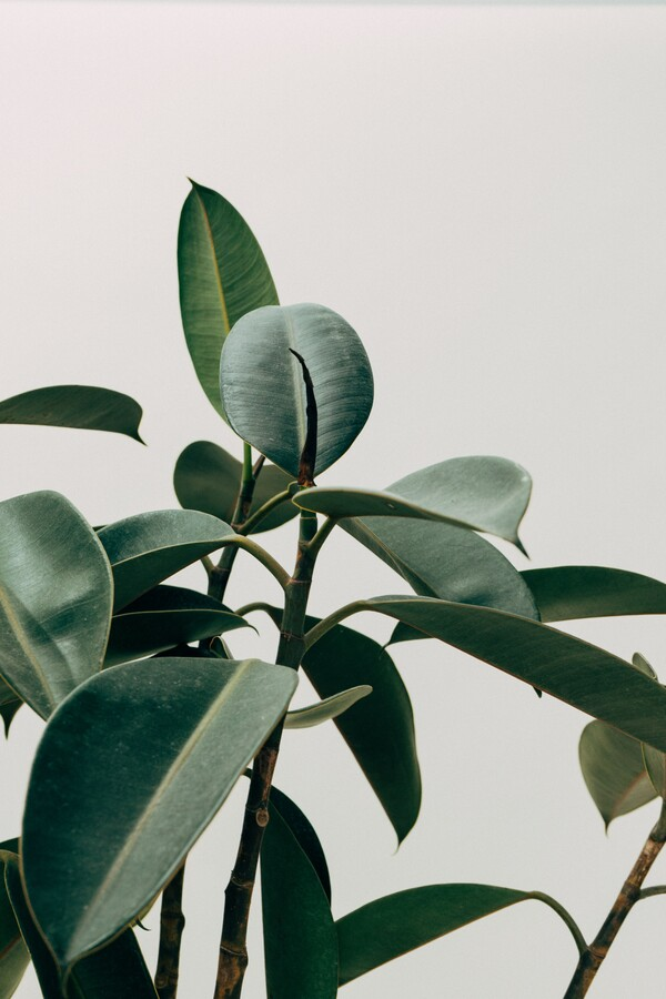 Homeplant Urban Jungle - Fineart photography by Christian Hartmann