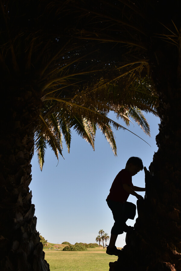 Climbing a palm tree - Fineart photography by Thomas Heinze