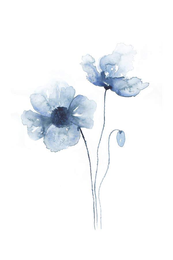 Blue Poppies No. 2 - fotokunst von Cristina Chivu