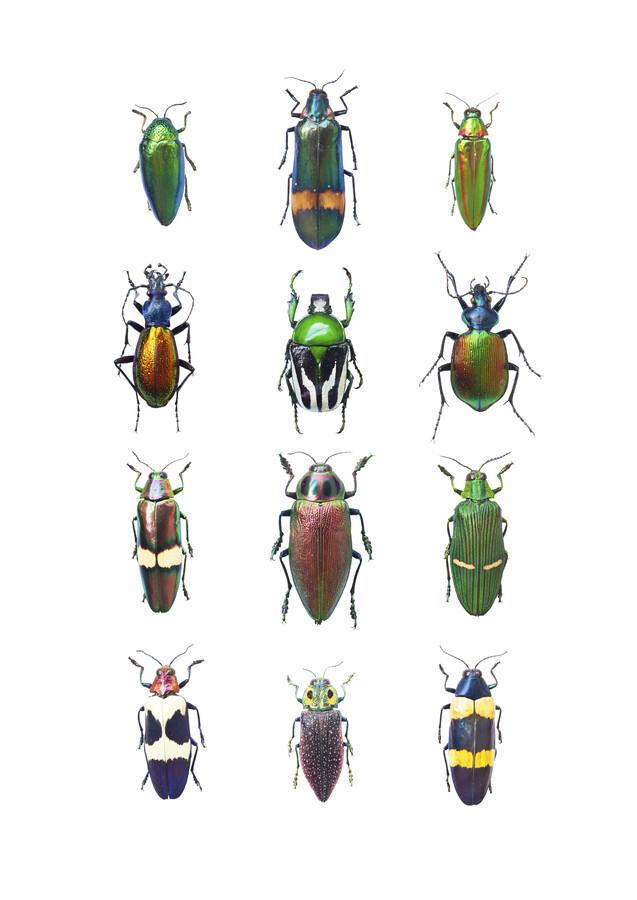Rarity Cabinet Insect Beetle Mix - fotokunst von Marielle Leenders