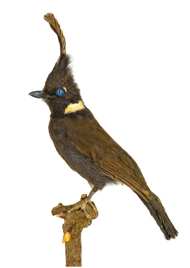 Rarity Cabinet Bird Black - Fineart photography by Marielle Leenders