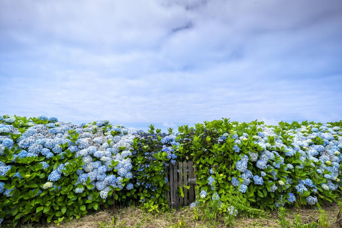 Azoren #1 - fotokunst von J. Daniel Hunger