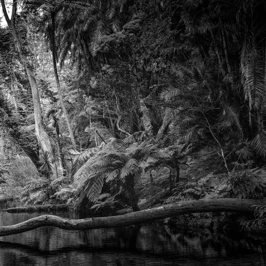 Azorenwald - fotokunst von J. Daniel Hunger