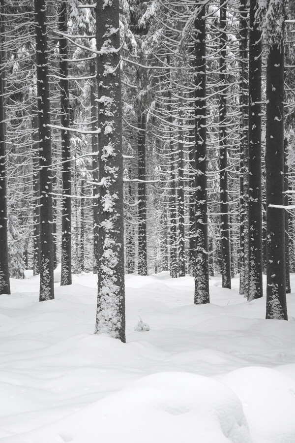 Deep Dark White Forest - Fineart photography by Studio Na.hili