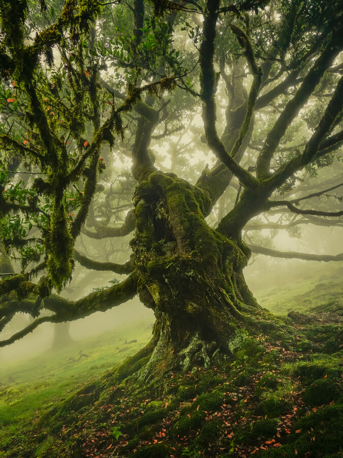 under the majestic treetop - Fineart photography by Anke Butawitsch