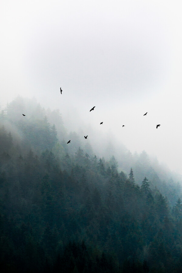Foggy Morning 4 - Fineart photography by Mareike Böhmer