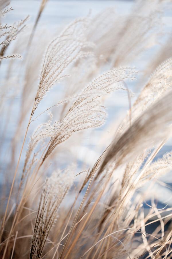 Grass 5 - fotokunst von Mareike Böhmer