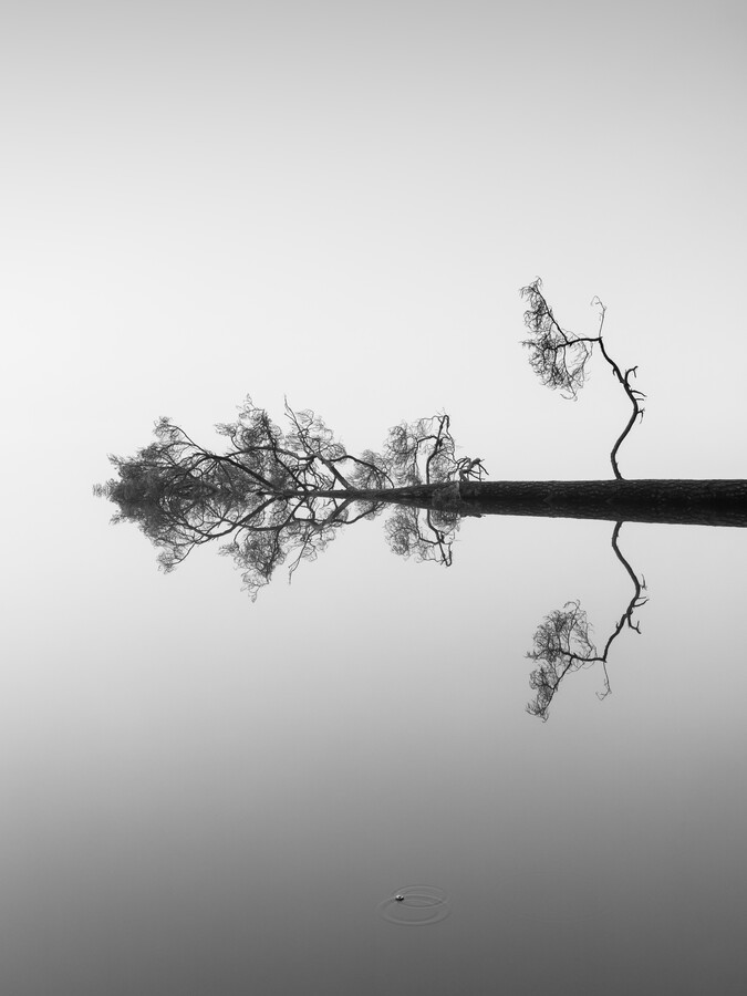 Reflections on Water - fotokunst von Holger Nimtz