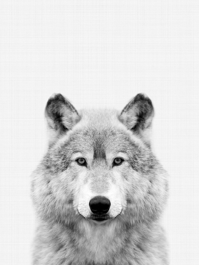 Wolf (Black and White) - Fineart photography by Vivid Atelier