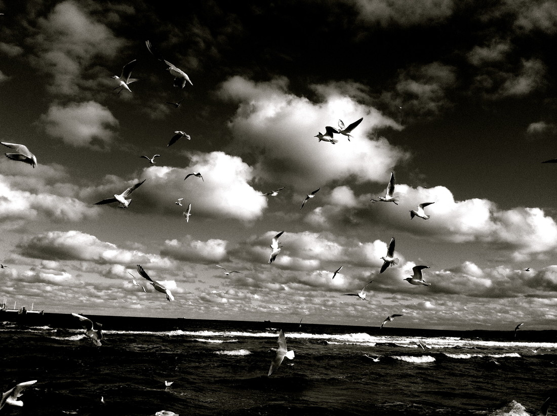 black birds - Fineart photography by Linda Steinhoff