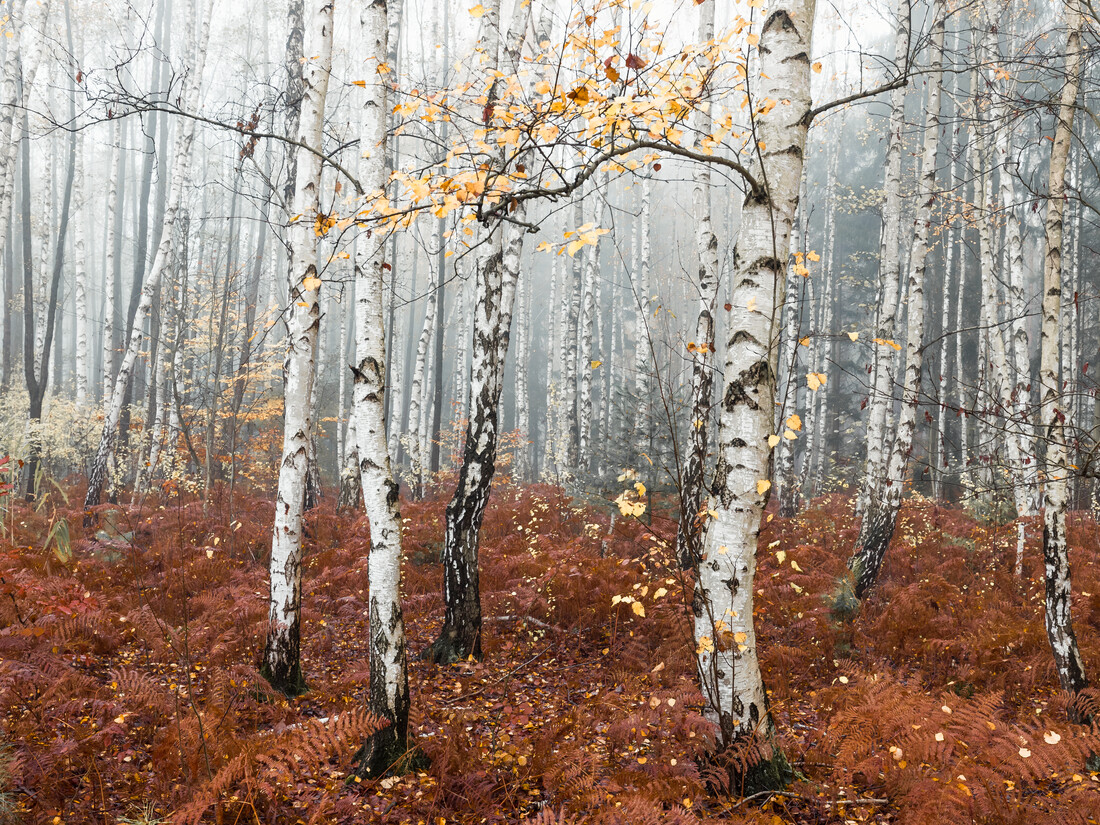 Märchenwald - fotokunst von Holger Nimtz