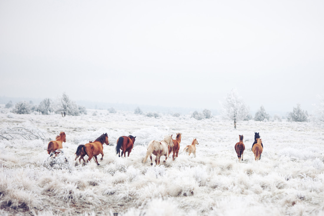 Winter Horseland - Fineart photography by Kevin Russ