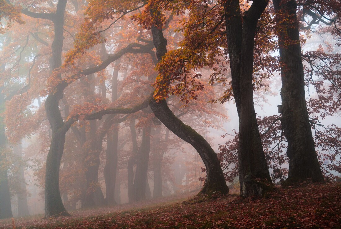 Autumn Gate - Fineart photography by Alex Wesche