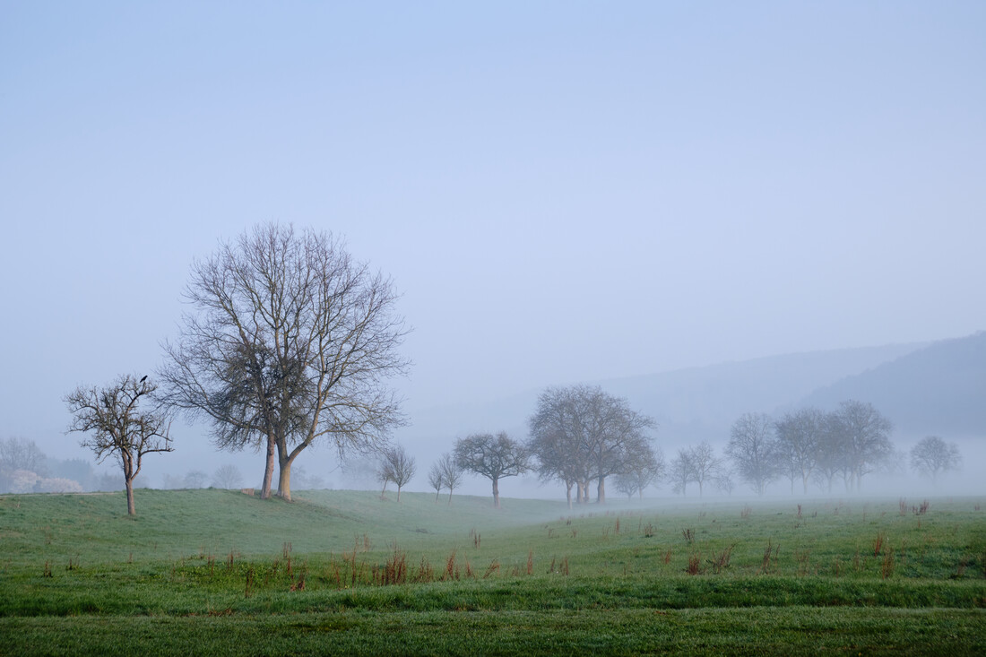 Morning mist and trees - Fineart photography by Alex Wesche