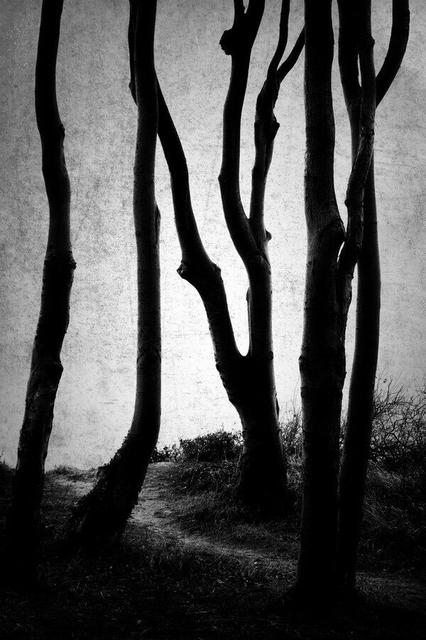 Shaped by Wind - Fineart photography by Alex Wesche